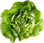 salatat